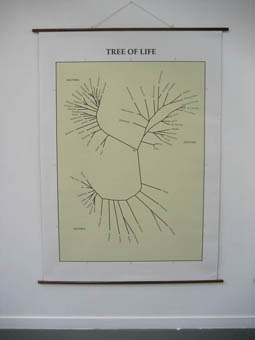 Wall map 1: The tree of life. Displaying the ramification of evolution. (160 x 220 cm)
